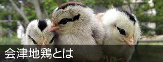会津地鶏とは